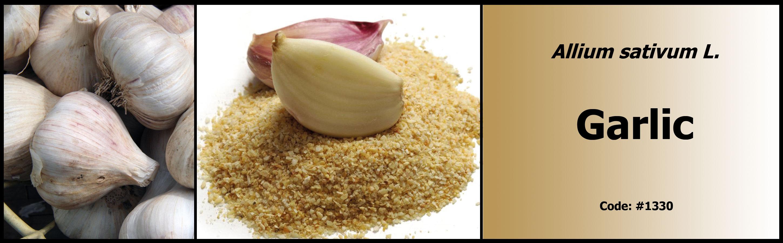 1330_Garlic