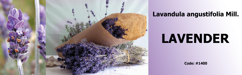 1400_Lavender