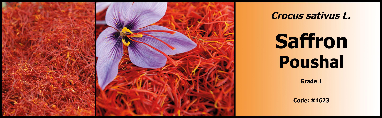 1623_Saffron-Poushal