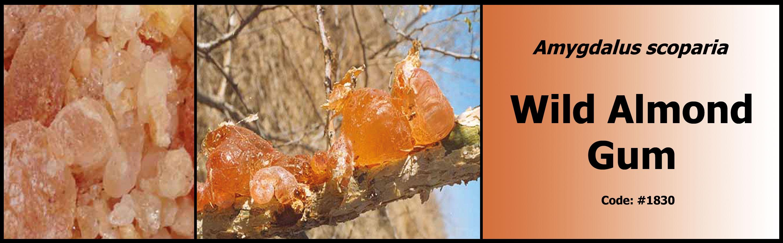 1830_Wild-Almond-Gum